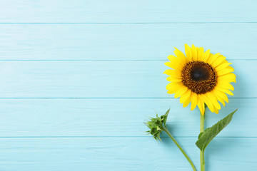 Yellow sunflower on wooden background, top view