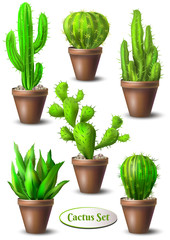 Set of different cacti in pots without flowers. Cactus collection. Vector illustration.