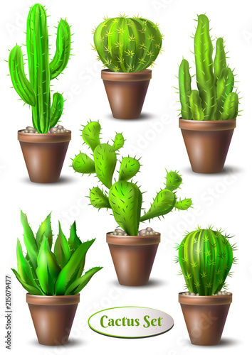 set of different cacti in pots without flowers cactus collection