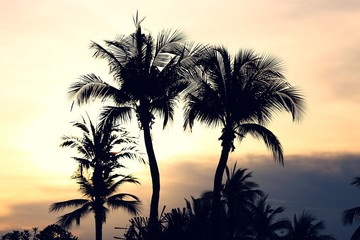 Silhouette of Palm coconut tree sunset sky beautiful view landscape blur background