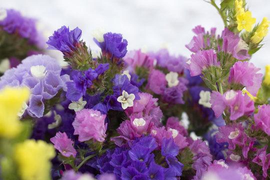 Closeup of vibrant and colorful limonium flowers (sea lavender)