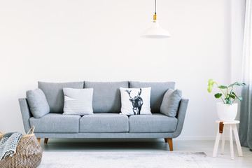 Grey lounge with two pillows in the real photo of white living room interior with fresh plant and empty wall with place for your painting