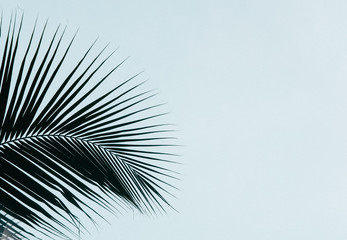 Palm leaves silhouette against clear sky. Creative minimalism. Copy space for text