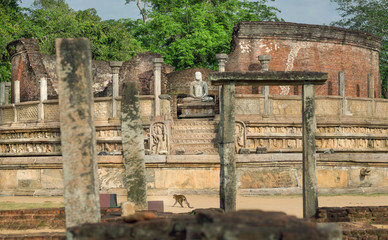 Ancient city Polonnaruwa and monkey past Buddha sculpture. Buddhist temple complex from 12th century, Sri Lanka. UNESCO World heritage Site