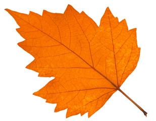 feuille sèche d'automne