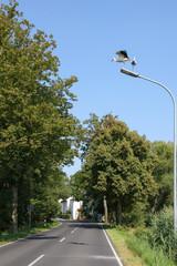 Störche, Spreewald, Leibsch