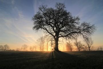 Sonnenstrahlen und Baum im Winter, Konzept Baumbestattung, Naturbestattung, Bestattungsarten  Wall mural