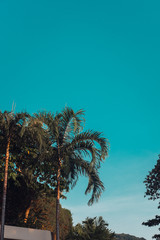 Green palm trees against clear vintage blue sky. Minimal. Copyspace. Toned image filter, sunlight