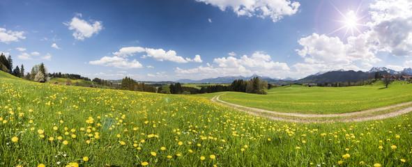 Panorama Landschaft mit Feldweg durch Frühlingswiese und Sonnenstrahlen