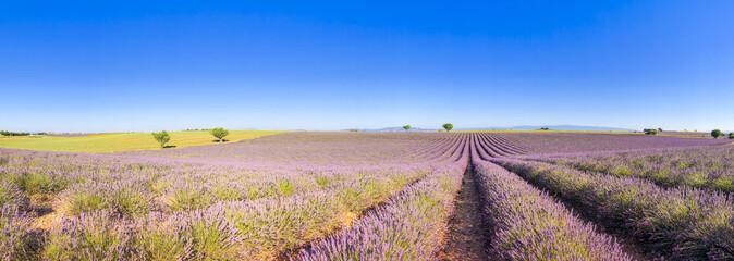 Panorama d'un champ de lavande à Valensole en Provence, France