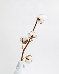 High key composition with white vase and cotton branch. Minimalism concept.
