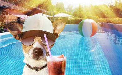 Hund mit Drink im Pool