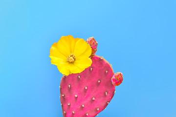 Cactus. Minimal Fashion. Creative Design. Art