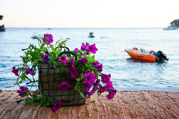 Flower pots with purple petunias on a stone wall covered with a cover, on the shore of the sea on the eve of the beautiful Parga. Petunia exserta. In a slightly blurred background.