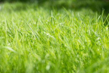 Green grass, background