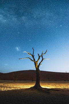 Dead acacia trees at night, Deadvlei, Namib-Naukluft National Park, Namibia
