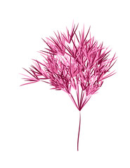 Reed stems ,bamboo leaves, thin narrow leaves.Different shades of pink. Isolated on white background