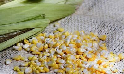 maíz, embrión, textil, aceite de maíz, fruta, natural, semilla maíz, cereales, maíz dulce, almidón de maíz, crudo, amarillo, mays, vegano, grapa, azúcar, blanco, dulce, maíz dulce, fondo, maíz, gran