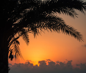 Palm trees in the backlight