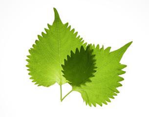 「しその葉」の画像検索結果