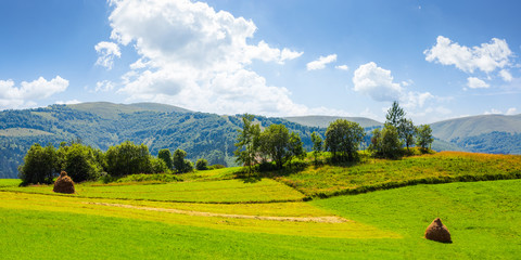 panorama of grassy agricultural field with haystacks and orchard. lovely rural summer landscape in mountains