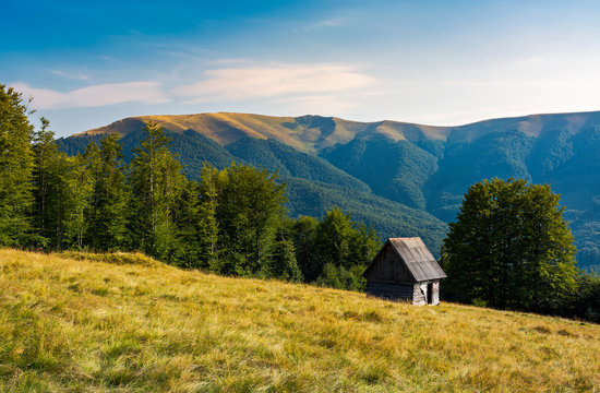 herd shed on a grassy hillside near the forest. abandoned place in mountains. lovely afternoon landscape
