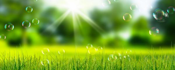 seifenblasen in der natur