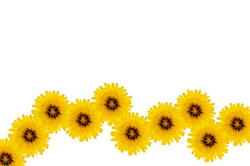 Horizontal line of yellow flowers on a white background.