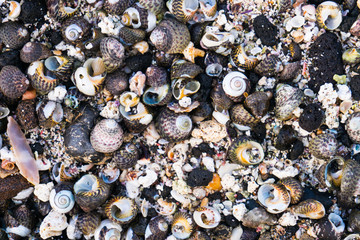 Colorful Seashells Background with Black Lava Rock on Beach