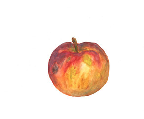 Apple on a white background, watercolor drawing