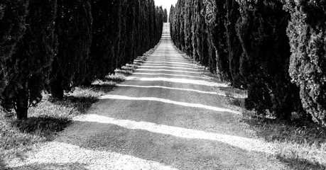 Cypress alley with rural country road, Tuscany, Italy. Black and white image. Wall mural