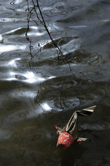 Origami coi over pond
