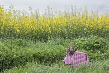 Origami rabbit at rape field