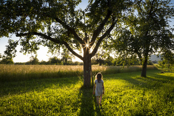Young girl walking on meadow to tree at summer evening