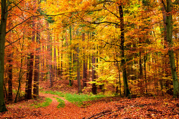 Yellow and green leafy path in the forest, Poland