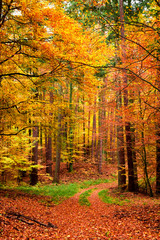 Yellow and green path in the autumn forest, Poland