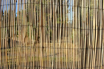 Closeup photograph of a bamboo divider between two suburban gardens. The photograph was taken on a sunny day.