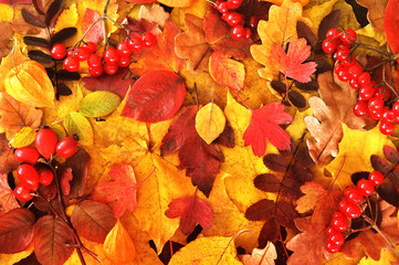 Autumn yellow, orange and red leaves on wooden background, fall leaf frame, toned