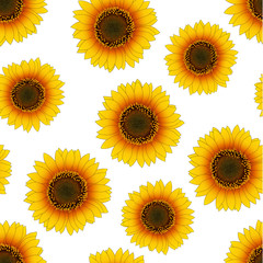 Orange Yellow Sunflower Seamless on White Background.