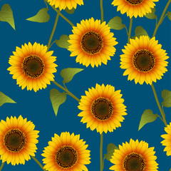 Orange Yellow Sunflower on Indigo Blue Background