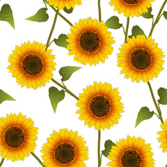 Orange Yellow Sunflower on White Background