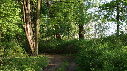 forest_road_18