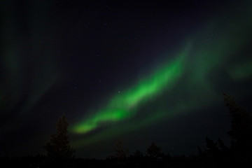 Amazing Northern Lights aurora borealis in Finalnd nordic nature landscape background. Very strong Northern Lights with trees background. Aurora borealis attract every year tourists and nature lovers.