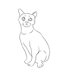 cat lines, vector