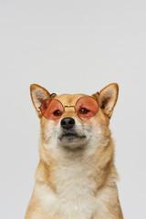 Fashionable pet