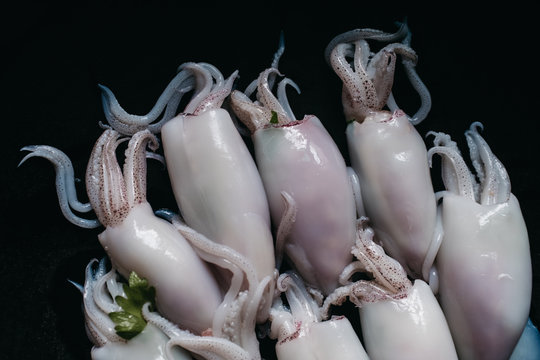 seafood squid