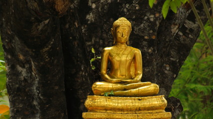 Gold Buddha Statue Meditation Under Tree