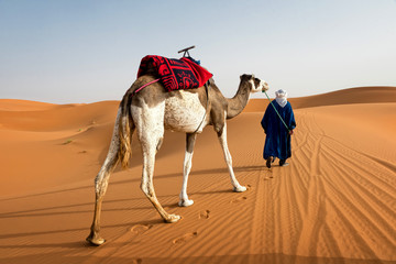 Berber and camel walking through the dunes on a sunny day
