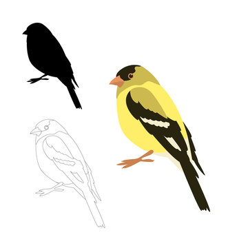 gold finch bird vector illustration flat style