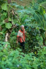 Karen people in his vegetable garden